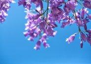 薄紫色の約束